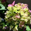 今週のお花183