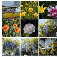 20030429花の美術館