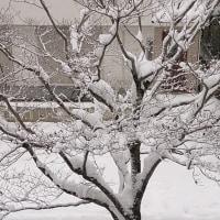 京都にも大寒波襲来、、、