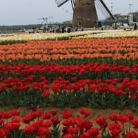 オランダに行ってみたワン