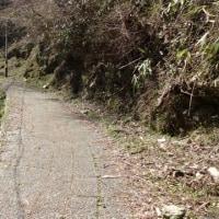 極楽橋のタチツボスミレ⑤ 不動坂を歩き続ける
