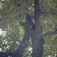 木の上から見つめる動物