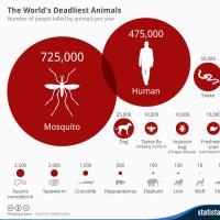 炭疽菌対策でカバを2000匹殺処分する是非は?(ザンビア)