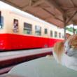 7月25日から東京・渋谷のギャラリー・ルデコで写真展「「鉄道」と「猫と鉄道」」が開催