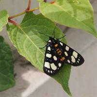 林道の昆虫 6月22日