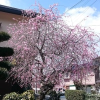 散歩にて・・・春ですねえ