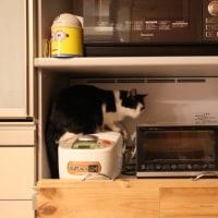 トースター保存庫