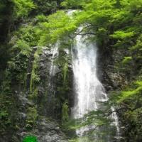大阪箕面の滝まで散策です。