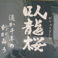 高山市一之宮にある「臥龍桜」を訪ねて