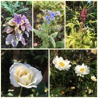 秋のいい季節の庭仕事