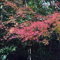 如意輪寺の紅葉