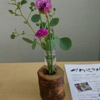 ただいまのお花はアルメリアとユーカリ(自家製)。