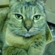 我が家の猫