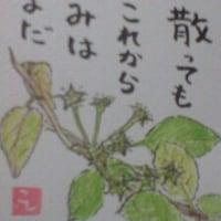 2017年5月16日の絵手紙