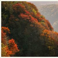 紅葉の仁田峠