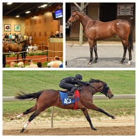 ��Fasig-Tipton Midlantic Two-Year-Olds In Training 2015�ۤ�����!(Smart Strike���𤬺ǹ��)
