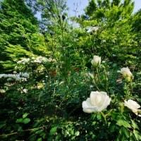 緑鮮やか(超広角10ミリレンズで撮った赤塚植物園)