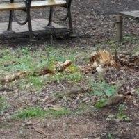 井の頭恩賜公園 倒木の跡