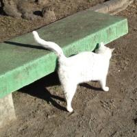 ฅฅฅฅฅฅฅ♡★ 明日は、猫の日 ???・・・★ 222・・・(ฅ`・ω・´)ฅ