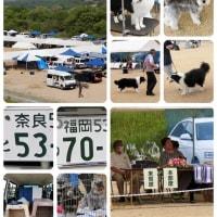 先日高梁川でドッグの共進会がありました