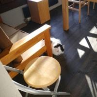 猫も大人になると(猫ブログ)