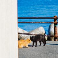 ダチョウ倶楽部の上島さんの鉄板ネタか! な光景 @相島のネコたち