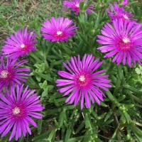 庭に咲く美しい花