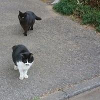 地域猫だったクロ&八胡