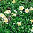 北海道旅行  2日目 大雪山散策  〜神々の遊ぶ庭〜 7/10