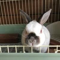 ウサギのパルちゃん10歳です
