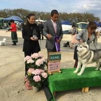 前橋ヤングマン愛犬クラブ展