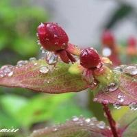 大雨の昨日