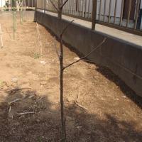 種から育ったアボガドの木
