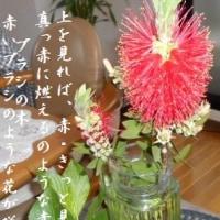 ニシキウツギ ブラシの木