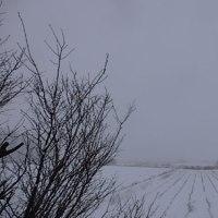 今朝は吹雪いている。