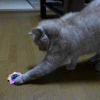 ネコに紙コマを見せたら