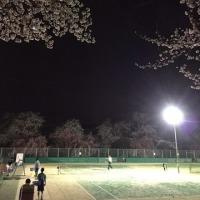 夜桜  齋藤