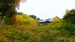 昨日(10/31)の東福寺の紅葉