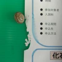 カタツムリ紙を食べる!