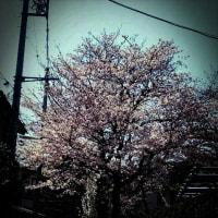 春休みもあっと言うまに(--;)