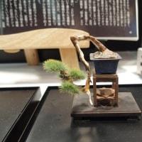 第56回静岡ホビーショー 今日はモーリンさんとプラッツさんの盆栽を紹介いたします