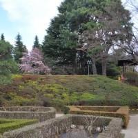 都立庭園 旧古河庭園