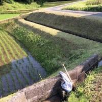草刈りのマナーと道具