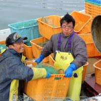2017年3月号が出ます 今月号は「春漁本番 ニシン 毛ガニ アサリ」などを取りあげます。