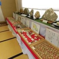 掛川層群の化石展。