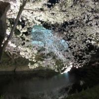 夜桜2017弘前公園