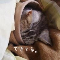 毛布でこっぽり、ミルキー。