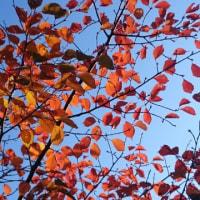 秋の気配@みほりょうすけ