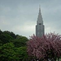 「日本庭園」/新宿御苑(2017春)