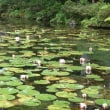 ゆり園からモネの池へ。